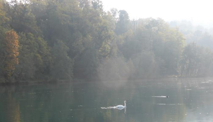 Imbersago (Lc) > cigno e fiume